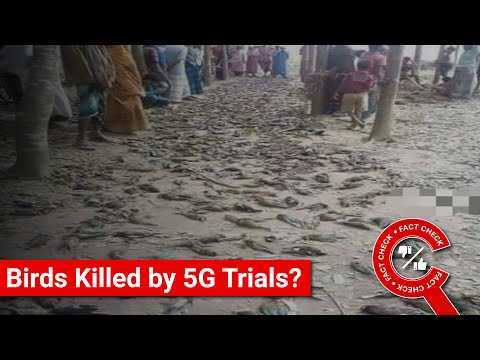 FACT CHECK: Does Image Show Birds Killed by 5G Trials in India? || Factly